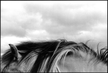 black-and-white photograph of a horse