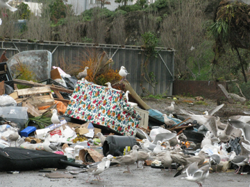 seagulls and discarded furniture