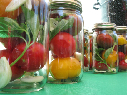 tomatoes and basil ready for canning