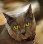 kitties3_sm copy 2