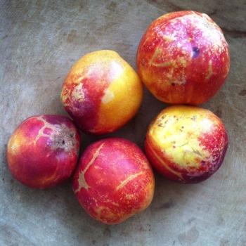 ugly nectarines, ugly fruit
